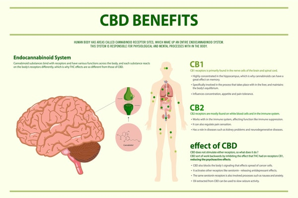 Cbd-Benefits-Human-Horizontal-Infographics