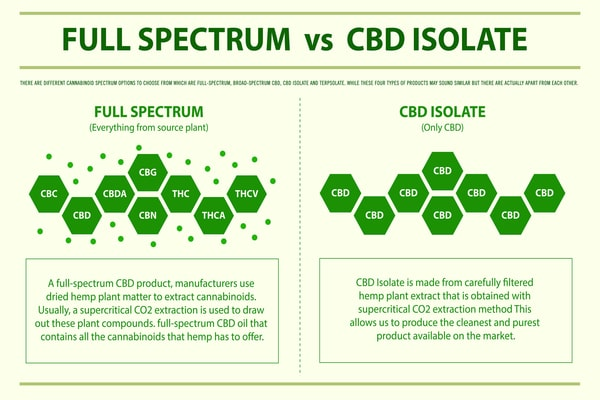 Full Spectrum vs CBD Isolate horizontal infographic illustration about cannabis as herbal alternative medicine and chemical therapy, healthcare and medical science